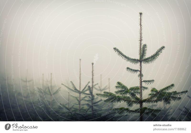Weinachtsbaum-Manufaktur Natur Pflanze Baum Feste & Feiern Bauernhof Tanne Tannennadel Tannenzweig Winter Nebel Weihnachtsbaum Wald Weihnachtsbaumspitze