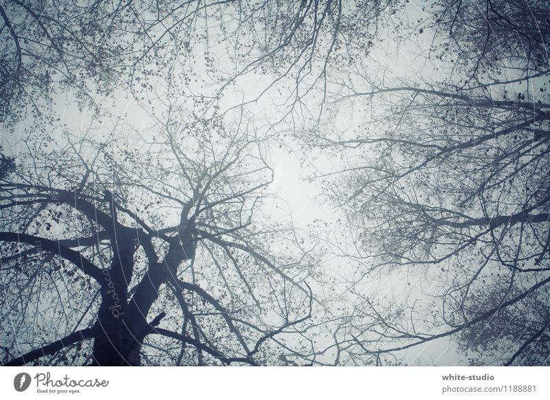 Im Dickicht Umwelt Natur Landschaft Pflanze Baum Wachstum hoch Baumkrone Krone Baumstamm Ast Vernetzung Farbfoto
