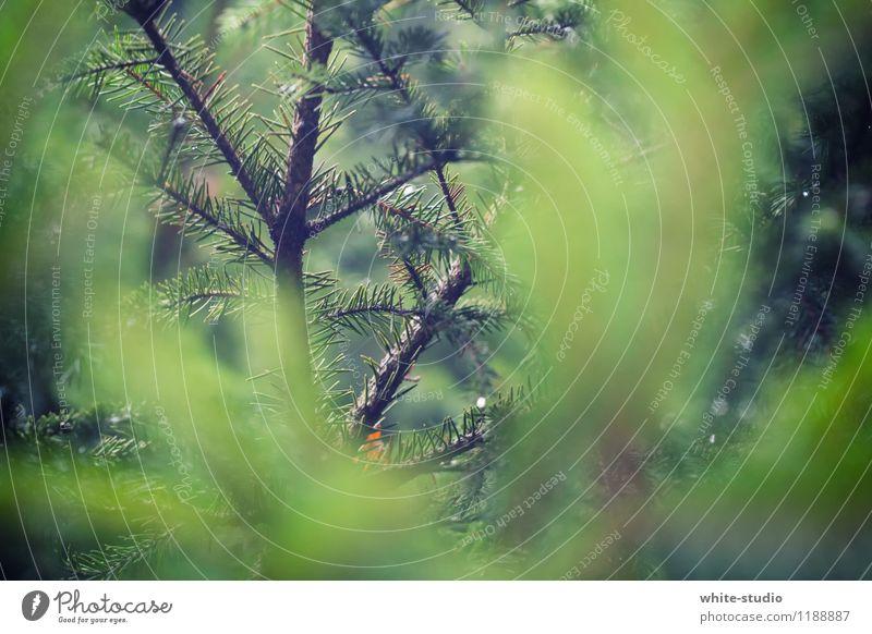 Im Dickicht Herbst Winter Baum Sträucher Neugier Interesse Postkarte Nadel Tanne Tannennadel Zweig Nadelzweig Tannenzweig Detailaufnahme verstecken Ast Geäst