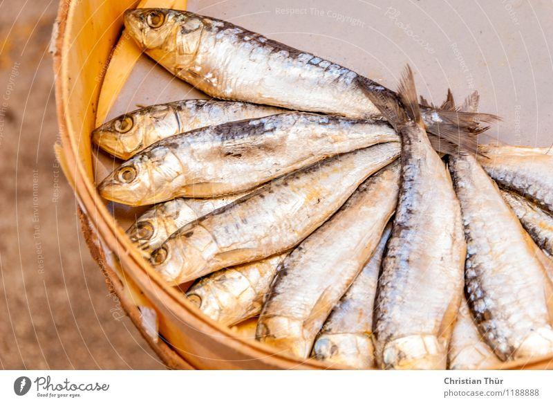 Frischer Fisch am Markt Ferien & Urlaub & Reisen Sommer Landschaft Gesunde Ernährung Leben Gesundheit Lebensmittel Gesundheitswesen Lifestyle Tourismus Ausflug