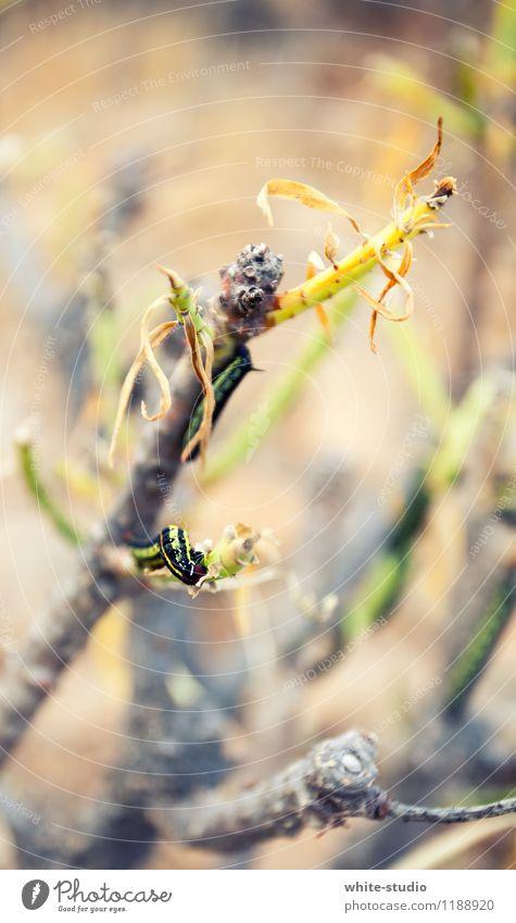 Raupe Nimmersatt krabbeln Schmetterling verwandeln Fressen Glatze langsam Halbschlaf Ernährung Insekt nie Ast klein Farbfoto Außenaufnahme Textfreiraum oben