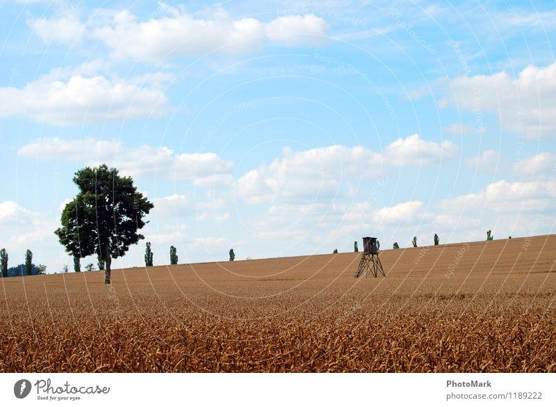 Erntezeit Umwelt Natur Landschaft Luft Himmel Wolken Sommer Schönes Wetter Pflanze Nutzpflanze Wiese Duft Unendlichkeit hell Wärme blau gelb weiß Erholung