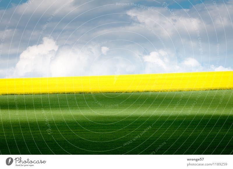 Frühsommer Himmel blau Pflanze grün weiß Landschaft Wolken Umwelt gelb Frühling grau Horizont Luft Feld Erde Schönes Wetter