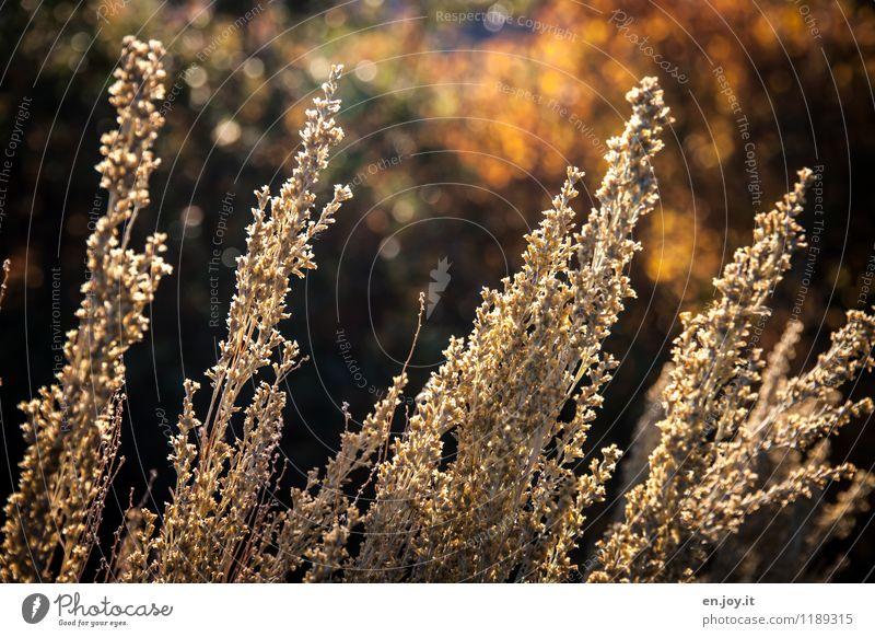 Abendsonne Umwelt Natur Landschaft Pflanze Sonnenlicht Sommer Herbst Klima Schönes Wetter Sträucher Gras Herbstlaub Garten Freundlichkeit Wärme gelb
