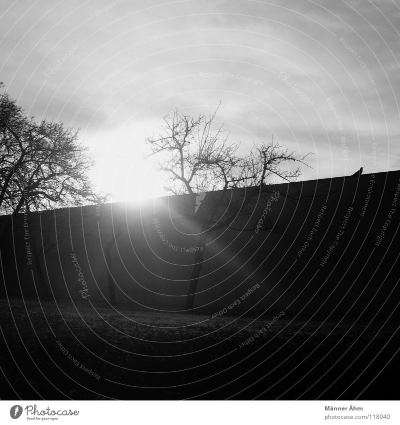 Rabenleben. Himmel Baum Sonne Winter schwarz dunkel Schnee Beleuchtung Vogel Ast Himmelskörper & Weltall Rabenvögel