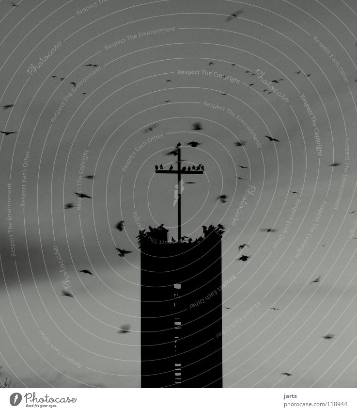 black day Kirchturm Religion & Glaube Götter Christentum Rabenvögel Vogel Teufel Hölle Hoffnung Verzweiflung Gotteshäuser Angst Panik Rücken Himmel Leben Tod