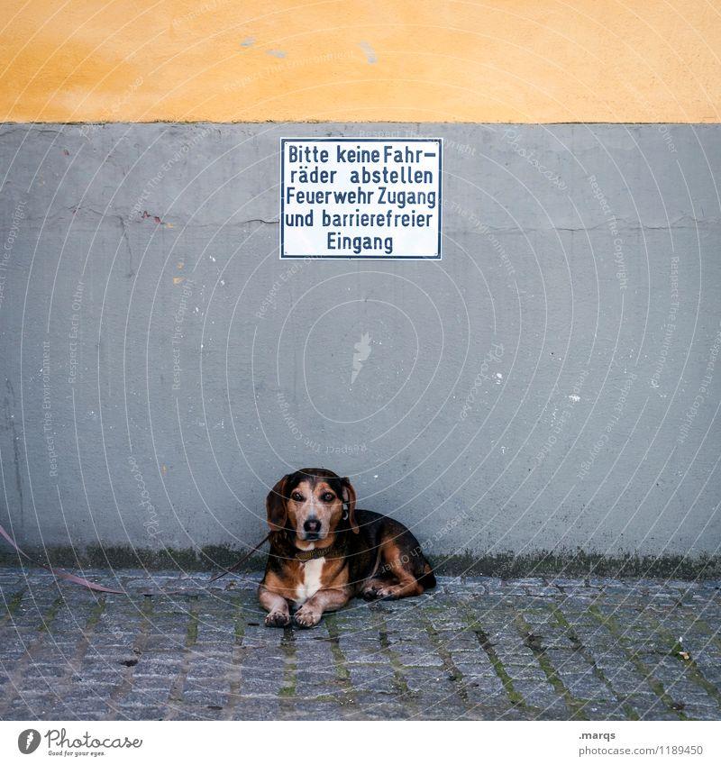 Hinweis Mauer Wand Hund 1 Tier Schilder & Markierungen Hinweisschild liegen Pause Hundeleine warten lustig Farbfoto Außenaufnahme Menschenleer Textfreiraum oben