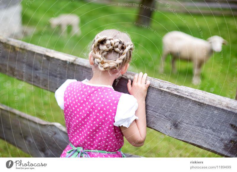 Heidi :) Mensch feminin Kind Mädchen Kindheit 1 3-8 Jahre Umwelt Natur Landschaft Frühling Sommer Schönes Wetter Wiese Tier Nutztier Schaf Tiergruppe entdecken