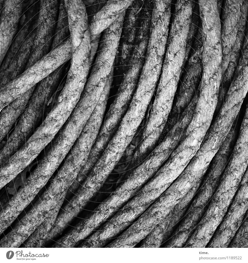 Seemannsgarn Handel Schifffahrt Seil Fischereiwirtschaft Linie ästhetisch einfach maritim rund Leben diszipliniert Ausdauer standhaft Zufriedenheit Design
