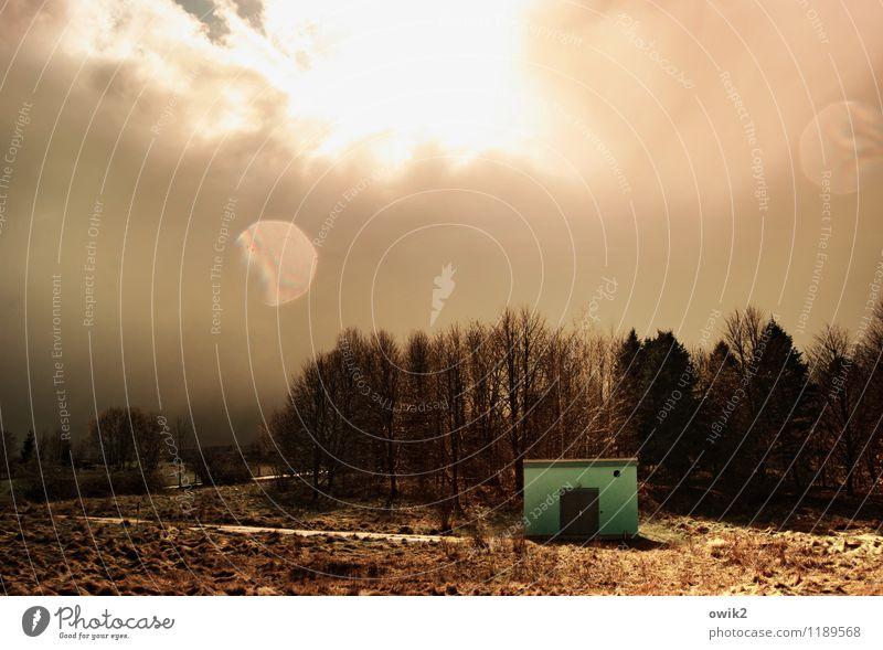 Kleines Haus am Wald Umwelt Natur Landschaft Pflanze Himmel Wolken Horizont Klima Wetter Schönes Wetter Baum glänzend leuchten Hütte Farbfoto Gedeckte Farben