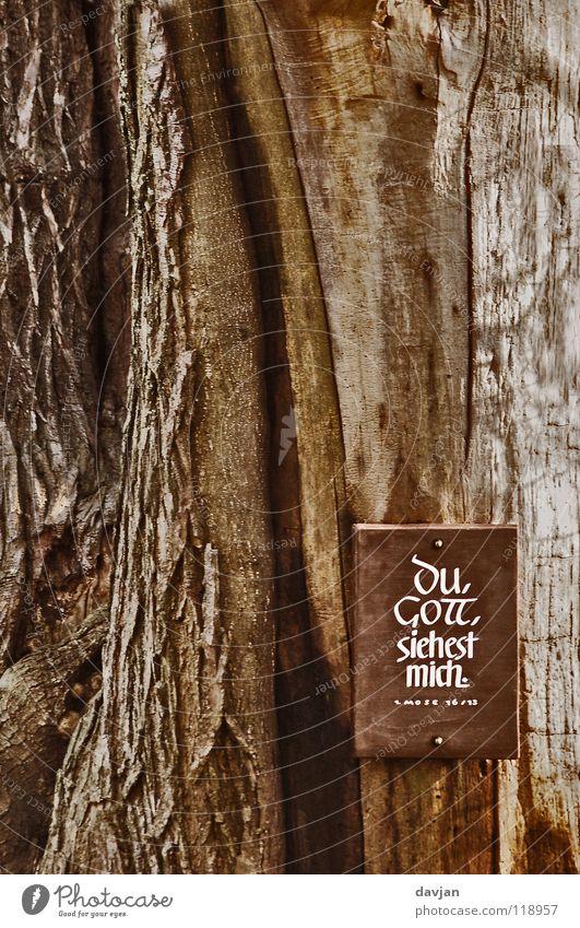 Hoffnung Baum Holz Religion & Glaube Erde Zufriedenheit Schilder & Markierungen Baumstamm Vertrauen Ewigkeit Gott Christentum Baumrinde Götter Bibel Wahrheit