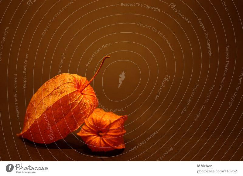 Duett Natur Pflanze gelb Herbst Park Zusammensein orange Frucht geschlossen Netz Dekoration & Verzierung Stengel Urwald Stillleben Samen