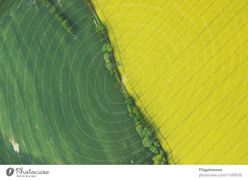 Grün/Gelb Lebensmittel Ausflug Ferne Freiheit Umwelt Natur Landschaft Klima Klimawandel Wiese Feld dehydrieren Wachstum Blühende Landschaften Grasland Raps