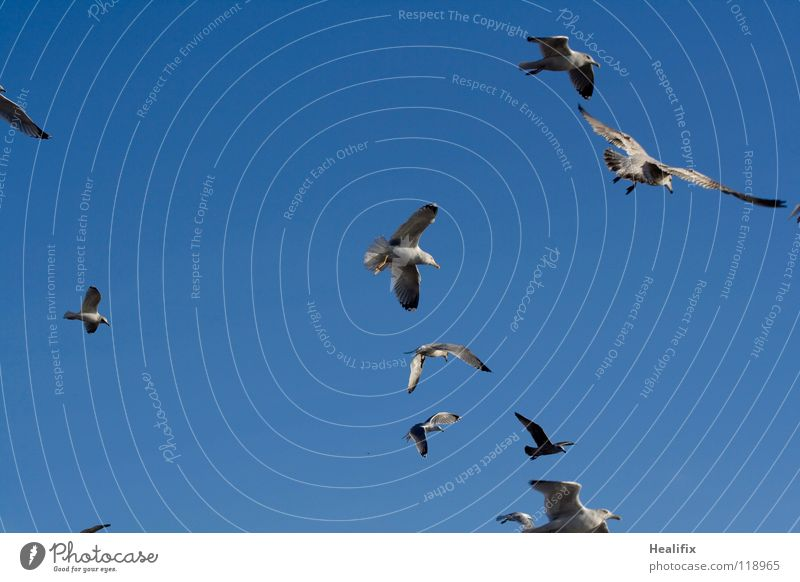 Free as a Bird Vogel Möwe Ferne weiß Angst Panik Himmel blau Freiheit silber hoch Niveau Schönes Wetter fliegen Flügel Feder Wing Feather