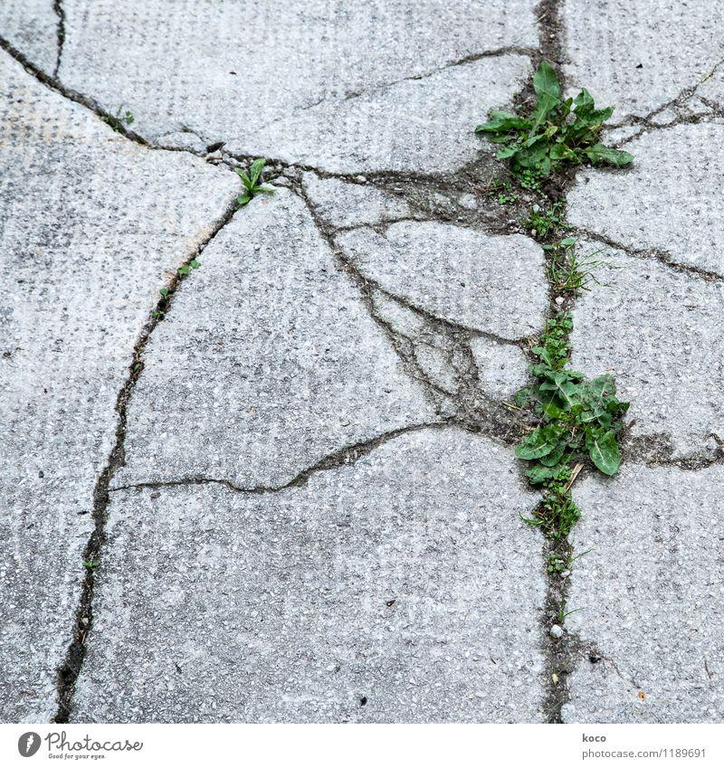 Risse im Asphalt Natur Pflanze grün Sommer Blatt schwarz Umwelt Wand Straße Frühling Gras Wege & Pfade Mauer grau Stein