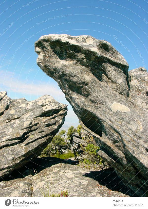 Dinosaurier Natur Berge u. Gebirge Stein Felsen Tafelberg