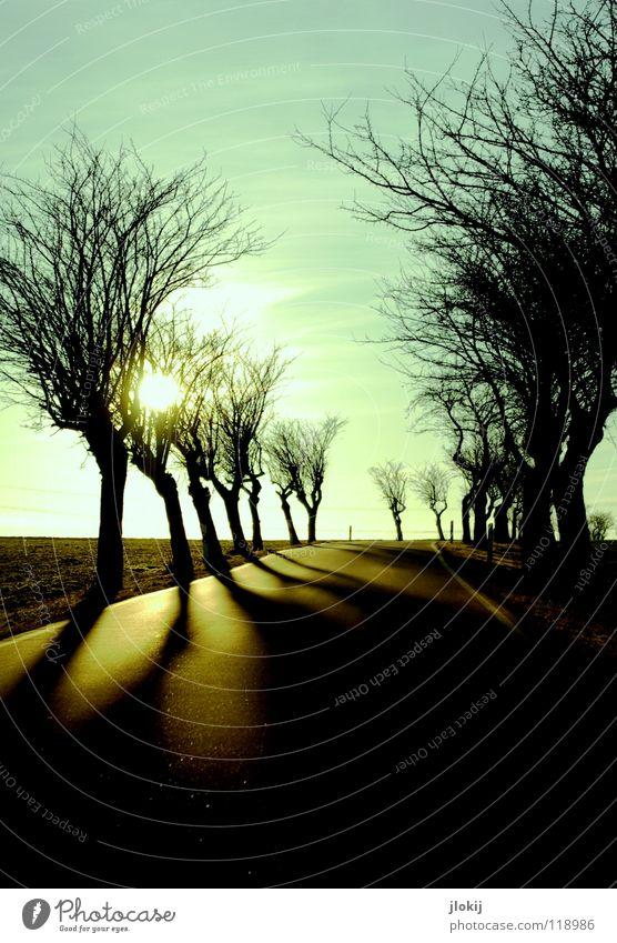 Unterwegs IV fahren Autofahren Baum Sonnenuntergang spät Abend kalt Winter Jahreszeiten Himmel Wolken begrenzen Wegrand Feld verzweigt durcheinander Beton