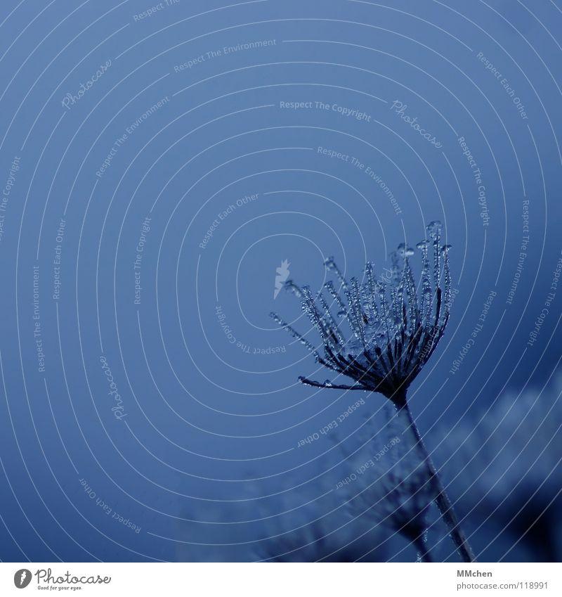 WinterWunder Pflanze Herbst Schnellzug Nebel Doldenblüte hauchen Morgen Morgennebel grün schlechtes Wetter gefroren Raureif Überleben überwintern frieren