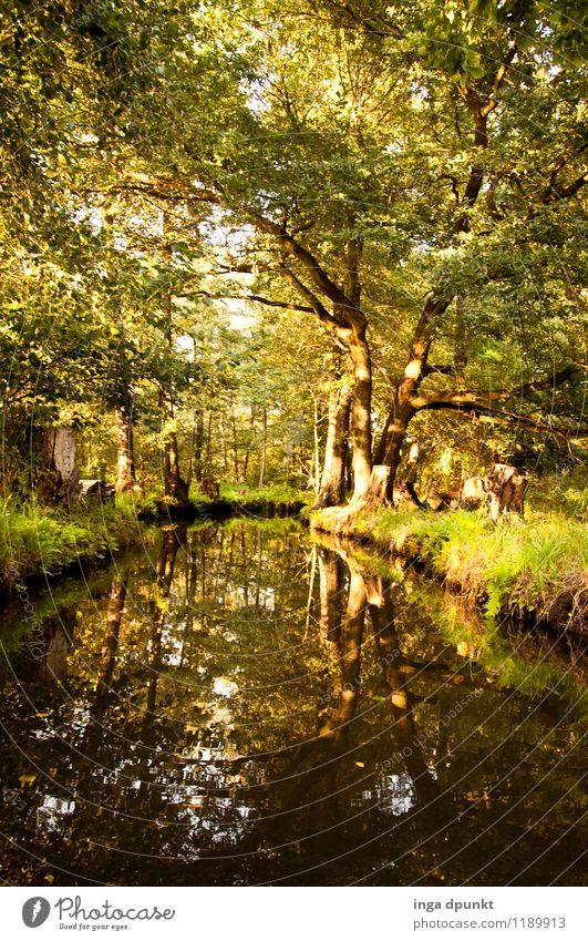 Spreewaldtour Umwelt Natur Landschaft Wasser Sommer Schönes Wetter Pflanze Baum Laubwald Wald Flussufer Brandenburg Deutschland entdecken Erholung erleben
