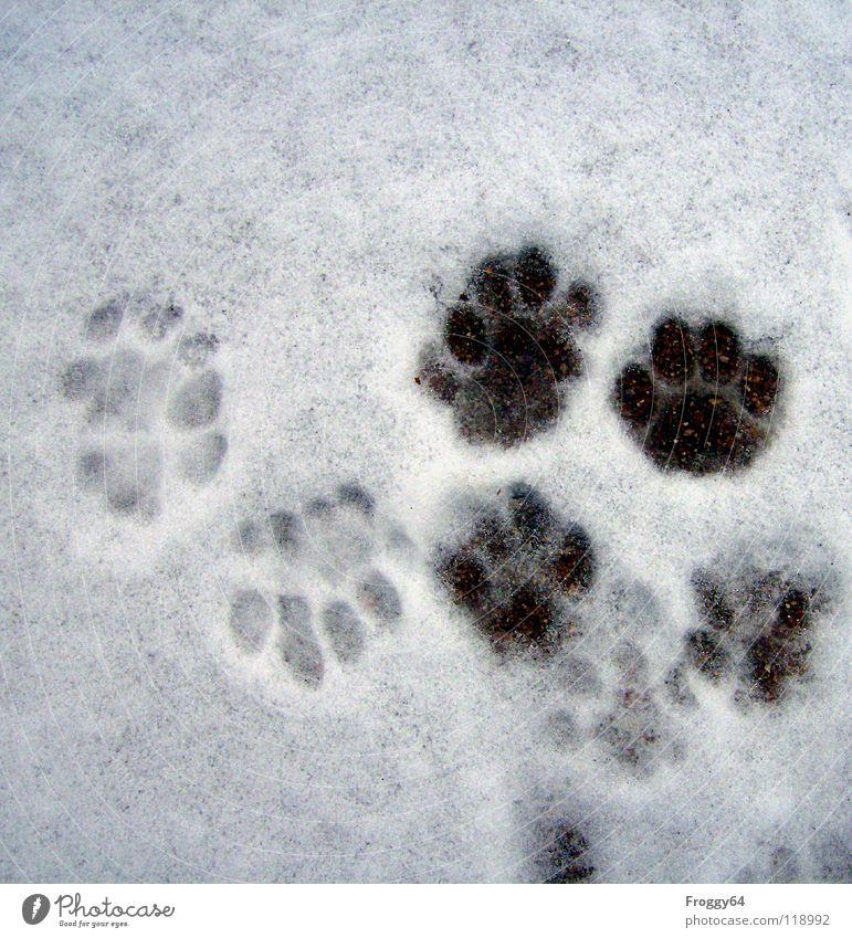 Auf Spurensuche.... schwarz weiß Katze Pfote Landraubtier Winter kalt Fußspur Schwarzweißfoto Säugetier Schnee anna froggy64 terasse