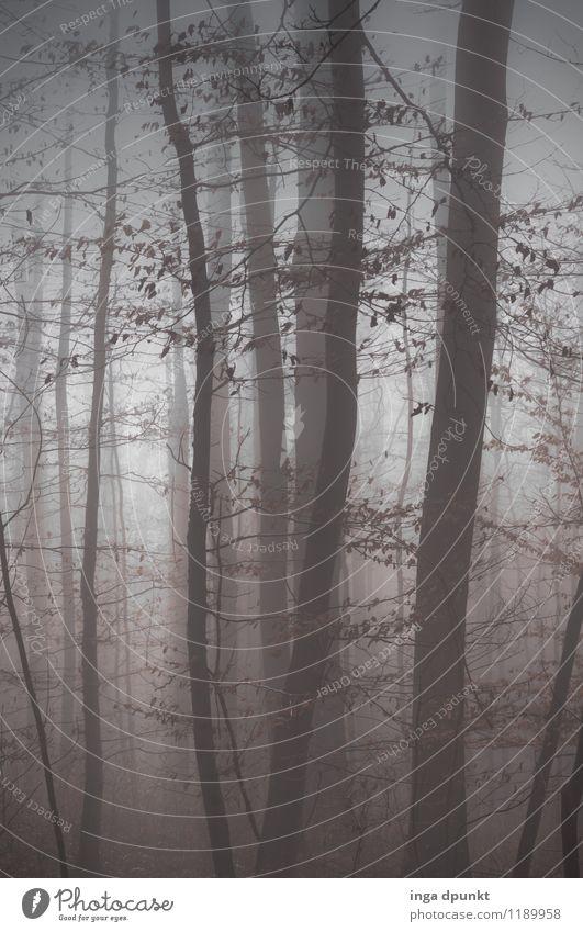Nebelwald Umwelt Natur Landschaft Herbst Winter Wetter Pflanze Baum Wald Buchenwald außergewöhnlich dunkel fantastisch grau Jahreszeiten unklar Schwarzweißfoto