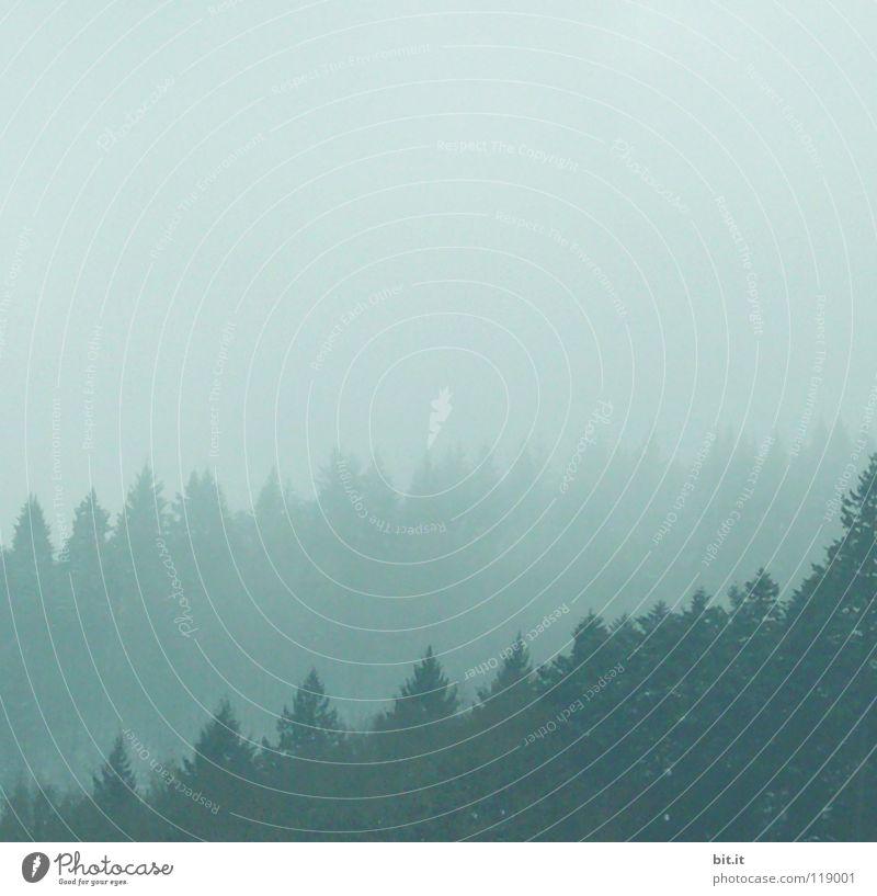 NEBEL-SCHICHTEN Himmel Natur Ferien & Urlaub & Reisen alt blau weiß Baum Einsamkeit Ferne Winter Wald kalt Berge u. Gebirge Wiese Schnee Hintergrundbild