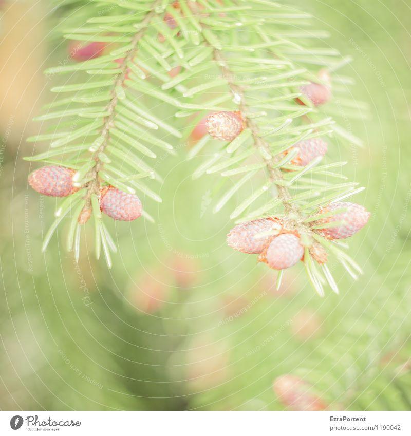 O´zapft is Umwelt Natur Pflanze Frühling Sommer Baum Wildpflanze Wald ästhetisch hell natürlich braun grün Nadelbaum Tannennadel Zapfen Zweige u. Äste Farbfoto
