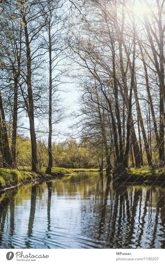 spreewald Umwelt Natur Landschaft Wasser Klima Wetter Schönes Wetter Spreewald Flussufer Frühling Wellen Sonne Farbfoto Außenaufnahme Menschenleer
