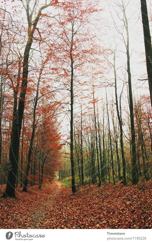 Häbschd. Natur Pflanze grün Wald schwarz Umwelt Gefühle Herbst natürlich braun ästhetisch Schönes Wetter Herbstlaub