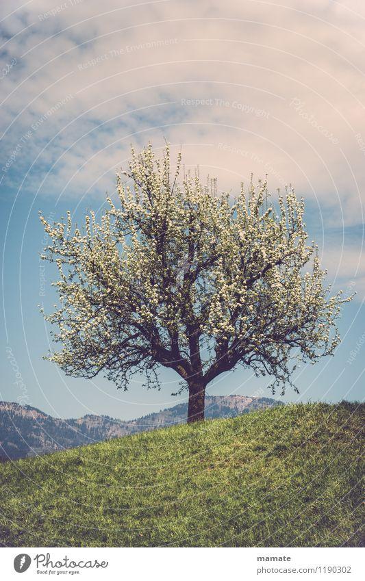 Blossom tree on a hill in Switzerland Natur Pflanze Himmel Wolken Sonnenlicht Frühling Schönes Wetter Baum Wiese Hügel Berge u. Gebirge Gipfel Menschenleer