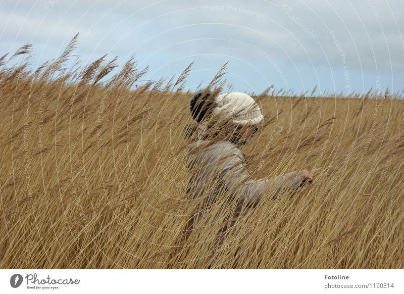 Mit Bommelmütze Umwelt Natur Landschaft Pflanze Himmel Wolken Küste Nordsee natürlich trist trocken Schilfrohr verstecken Versteck Mütze Quaste Farbfoto