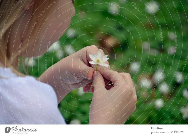 Blümchen Haut Kopf Finger Umwelt Natur Pflanze Frühling Schönes Wetter Blume Blüte Wald frisch hell klein nah grün weiß Buschwindröschen Farbfoto mehrfarbig