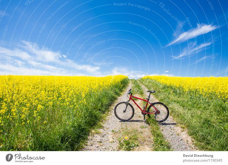 Bikesaison Himmel Ferien & Urlaub & Reisen blau Pflanze grün Sommer weiß rot Landschaft Wolken gelb Frühling Wege & Pfade Sport Horizont Freizeit & Hobby