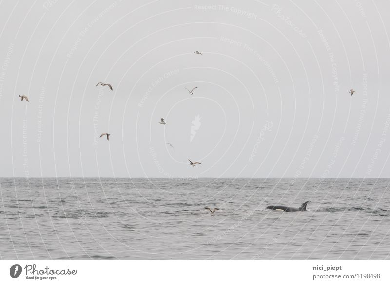 Wir müssen reden ... Himmel Natur Ferien & Urlaub & Reisen Wasser Meer Landschaft Tier Winter Umwelt Traurigkeit Frühling Herbst sprechen Essen