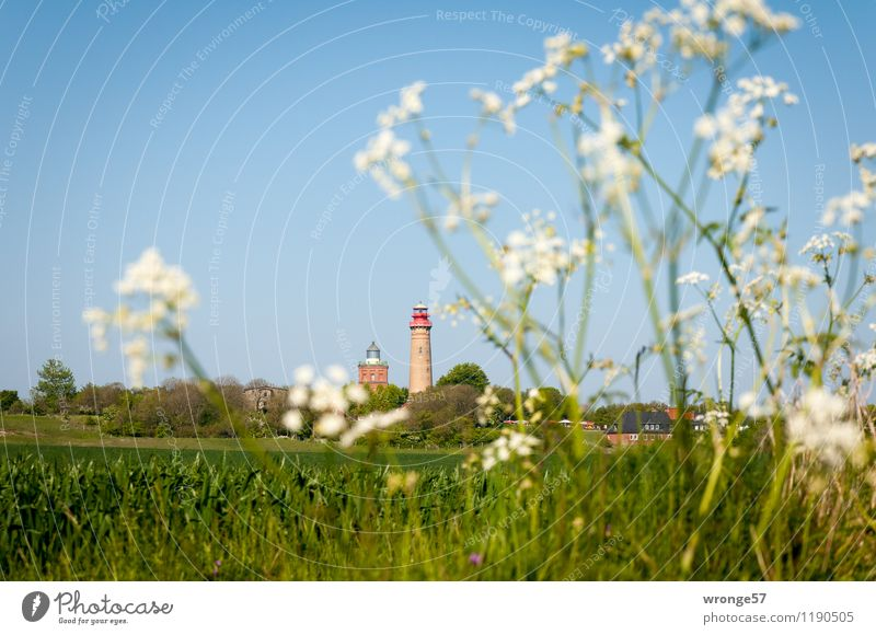 Urlaubsziel | Kap Arkona Himmel Ferien & Urlaub & Reisen blau Pflanze grün Sommer weiß Landschaft Ferne Deutschland Horizont Feld Ausflug Europa Schönes Wetter