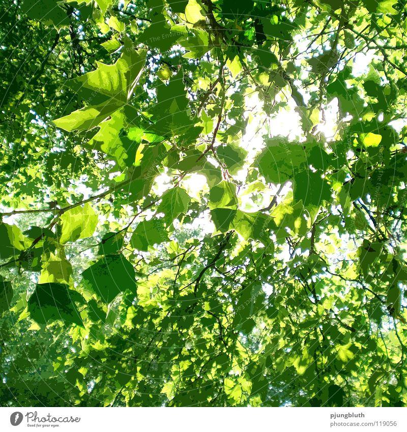 Sonnlicht Licht Sonnenstrahlen Baum Blatt frisch Frühling Mai Juni Hoffnung Wald grün Natur Glück