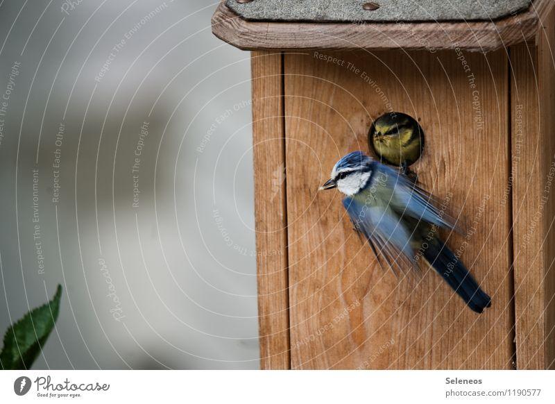 á la carte Natur Tier Umwelt Tierjunges Frühling Wiese klein Garten Vogel Park Wildtier Flügel nah Tiergesicht füttern Futterhäuschen