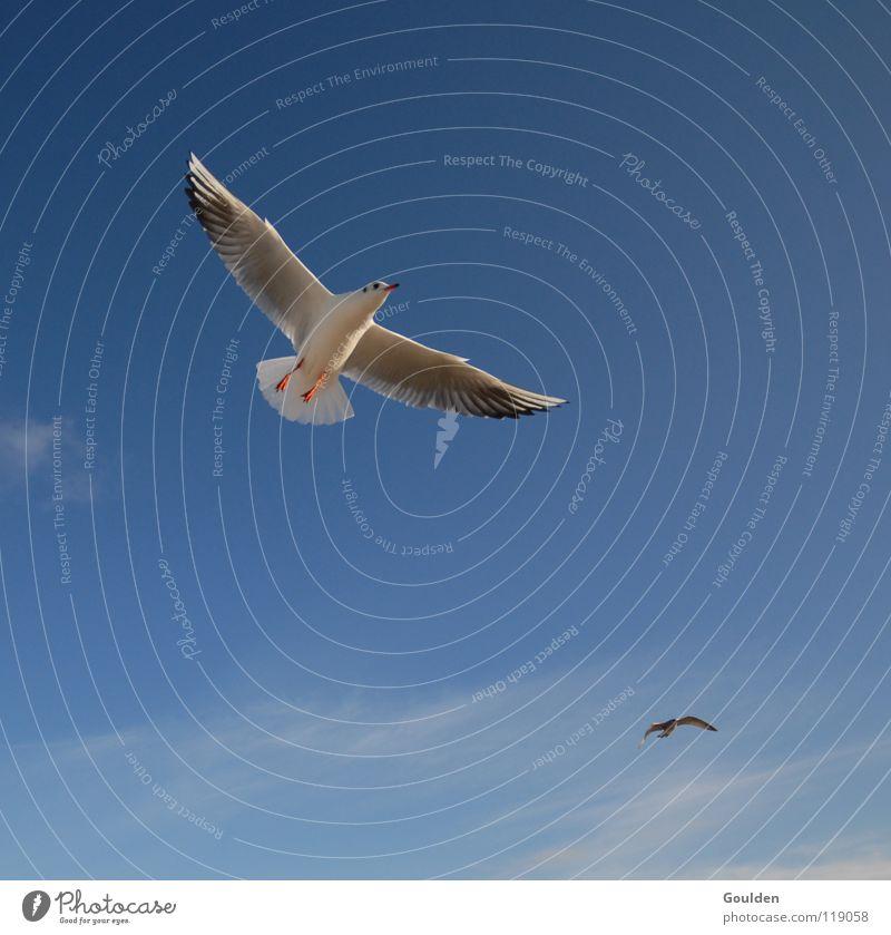 Vochelübawassa 1 Himmel weiß Meer blau Freude Strand Ferien & Urlaub & Reisen Erholung träumen Wärme Sand Luft Zufriedenheit Vogel Wellen Küste