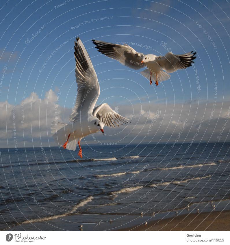 Vochelübawassa 2 Möwe Meer weiß Küste Ferien & Urlaub & Reisen Segeln Wärme Erholung träumen Vogel Lachmöwe Wellen Strand Luft Strömung aufsteigen Himmel blau