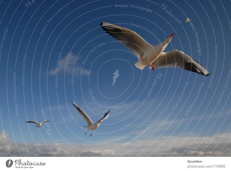 Fluggesellschaft Himmel blau Ferien & Urlaub & Reisen weiß Meer Freude Strand Erholung Wärme Küste Sand träumen Luft Vogel Wellen Wetter