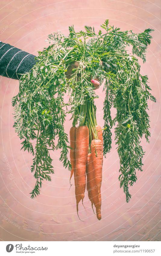 Hand hält Karotten Pflanze grün weiß Blatt natürlich frisch Ernährung Gemüse Ernte Diät Vitamin Vegetarische Ernährung Wurzel Zutaten roh