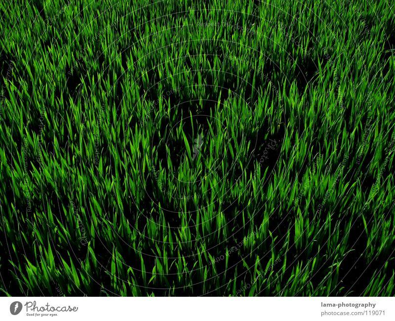 ORANGE Blume grün Sommer Wiese Gras Frühling Feld Hintergrundbild frisch Wachstum Dekoration & Verzierung Halm gießen saftig Gärtner knallig