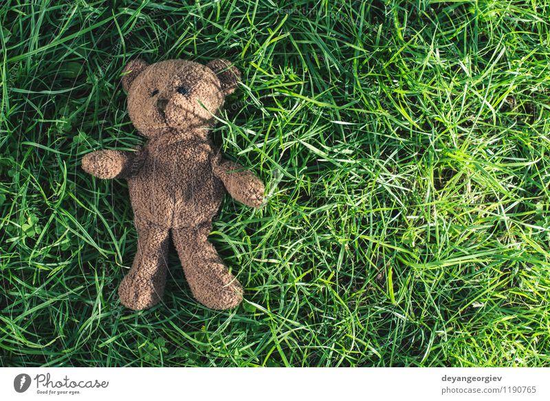 Teddybär auf dem Gras. Kind grün weiß Freude Tier gelb Liebe natürlich Feste & Feiern braun Park Dekoration & Verzierung Kindheit sitzen niedlich