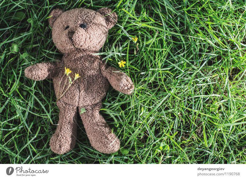 Kind grün weiß Freude Tier gelb Liebe Gras natürlich Feste & Feiern braun Park Dekoration & Verzierung Kindheit sitzen niedlich