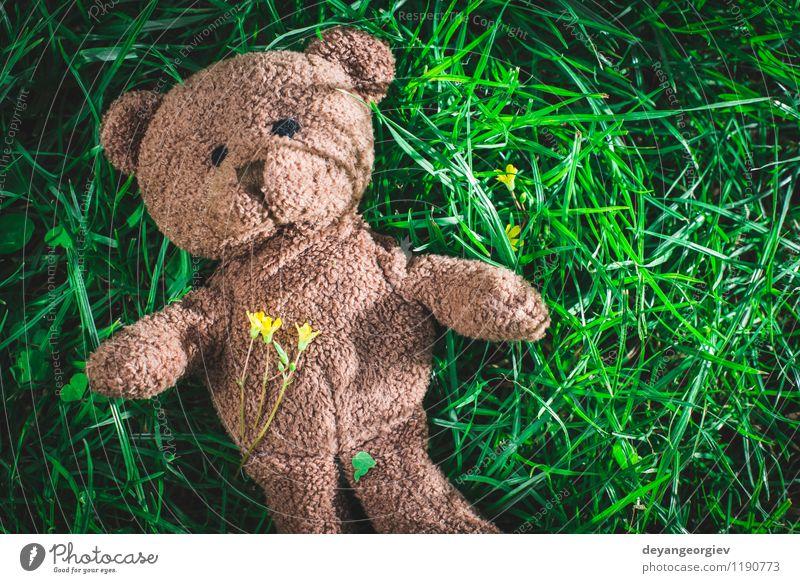 Teddybär auf dem Gras Kind grün weiß Freude Tier gelb Liebe natürlich Feste & Feiern braun Park Dekoration & Verzierung Kindheit sitzen niedlich