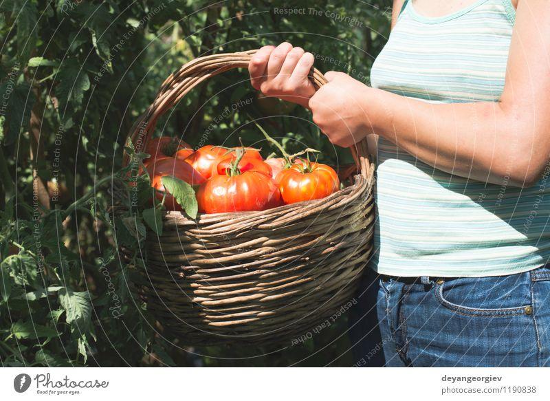 Tomaten im Korb auswählend. Mensch Frau Natur Pflanze grün Sommer rot Hand Erwachsene natürlich Garten Lifestyle Frucht frisch Gemüse Ernte
