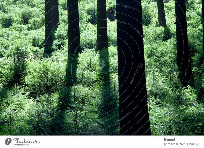 Wald im Sauerland Umwelt Natur Landschaft Baum Wiese Feld Erholung Fitness genießen rennen Baumstamm Baumstruktur Farbfoto Außenaufnahme Tag Abend