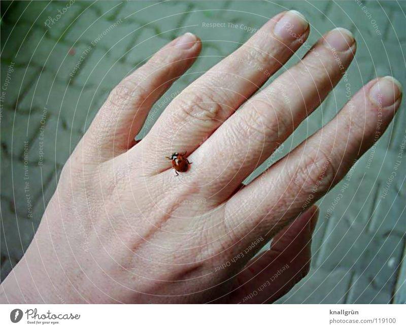 Krabbelkäfer Hand Finger Marienkäfer grau Käfer Kopfsteinpflaster Stein