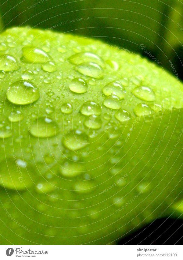Blatt und so... grün Herbst nah Pastellton harmonisch geschmackvoll Gesundheit Fröhlichkeit bestäuben Sprühflasche nass Lichtbrechung Wasser Farbe Makroaufnahme
