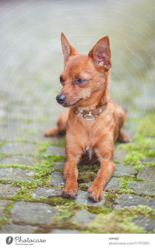dog Hund Tier Tierjunges klein Haustier Tiergesicht kuschlig